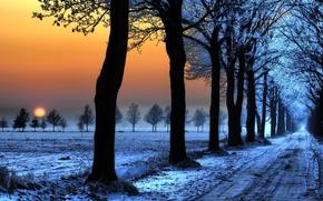 Картинка дорога, снег, следы, Зима, деревь