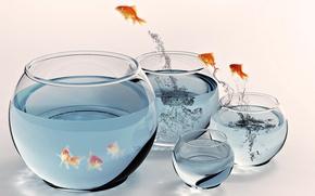 Картинка рыбки, полёт, размеры, аквариумы