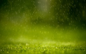 Картинка зелень, трава, капли, брызги, дождь
