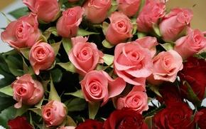Картинка цветы, розы, разные