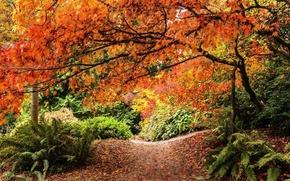 Картинка дорога, осень, деревья, природа, вид