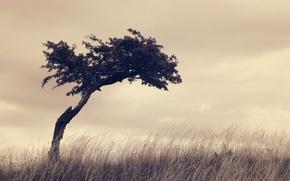 Картинка природа, ретро, дерево