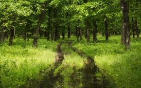 Картинка зелень, лес, лето, трава, green, Природа, summer, grass, forest, nature