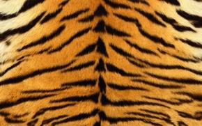 Обои мех, тигр, полоски, шкура, полосатый