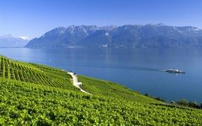 Картинка лето, горы, озеро, Швейцария, Альпы