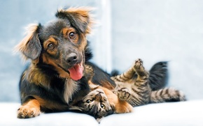 Картинка Dog, puppy, cat, animal, sweet, funny, snout