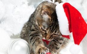 Картинка зима, кот, снег, шапка, Рождество, Новый год, Christmas, Cats, Kittens