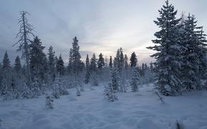 Обои снег, зима, Финляндия, деревья, Лапландия, лес