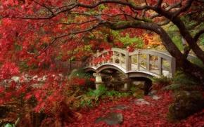 Картинка осень, листья, Япония, сад