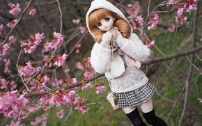 Картинка ветки, вишня, игрушка, кукла, сакура, цветение