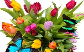 Картинка бабочки, цветы, яркие, крылья, красота, лепестки, тюльпаны, красные, red, розовые, оранжевые, разноцветные, yellow, pink, wings, …