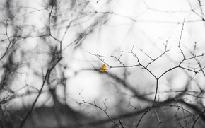 Картинка природа, лист, фон