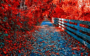 Картинка осень, лес, листья, деревья, парк, мостик, тропинка, багрянец