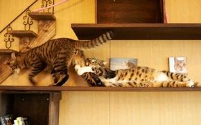 Обои кот, дом, коты, игра, полка