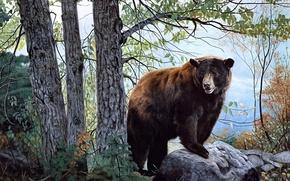 Картинка forest, бурый медведь, bear, nature, painting, Charles Frace, Morning Watch