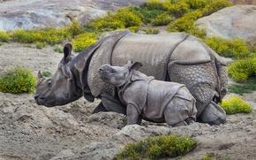 Картинка природа, фон, носороги