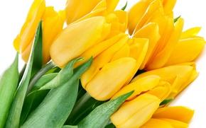 Картинка листья, цветы, яркие, красота, букет, лепестки, тюльпаны, yellow, жёлтые, flowers, beauty, petals, bouquet, bright, Tulips