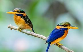 Картинка птица, ветка, перья, клюв, пара, хвост, зимородок