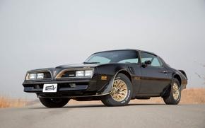 Картинка car, Black, muscle, Pontiac, 1979, Trans