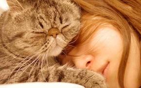 Картинка кошка, девушка, сон