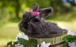 Картинка цветы, кролик, чёрный кролик