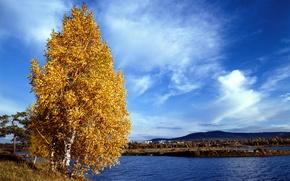 Обои берег, листья, осень, желтые, небо, река, облака, березы