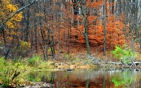 Картинка осень, лес, деревья, пруд, отражение