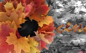 Картинка листья, природа, Осень, опавшие