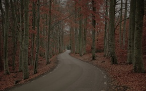Картинка дорога, осень, лес, деревья, природа, листва, Швеция, Robert Gustavsson Photography, хмурый день
