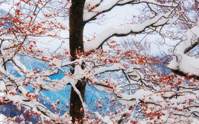 Обои winter, freeze, mountains, branches, tree, leaves, clouds, snow, frost