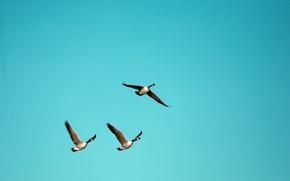 Обои птицы, небо, природа