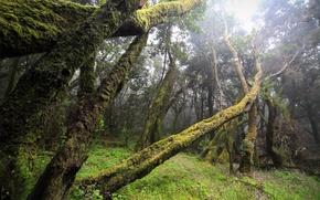 Картинка лес, туман, мох, бурелом