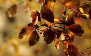 Картинка макро, листва, ветка, осень, Janet рhotography