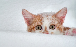 Картинка зима, белый, снег, кошак, рыжий, 156