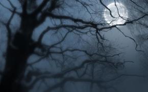 Картинка ночь, туман, луна