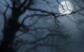Обои луна, туман, ночь