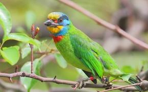 Картинка цвет, дерево, перья, ветка, птица, клюв, листья