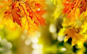 Картинка листья, макро, желтые, над водой