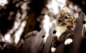 Обои боке, забор, размытость, кот