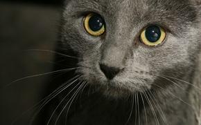 Картинка кот, усы, взгляд, кошки, мордашка, хорошенький