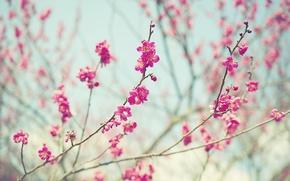 Картинка цветы, ветки, стебли, бутоны, розовые цветы, боке