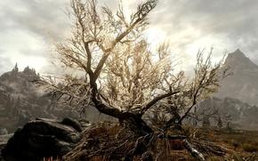 Картинка tree, Skyrim, sun glare