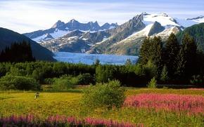 Картинка снег, деревья, цветы, горы, человек, Аляска, луг