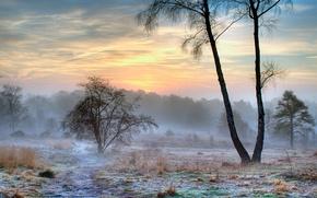 Картинка зима, иней, снег, природа, туман, утро
