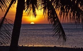 Картинка тропики, пальмы, океан, вечер