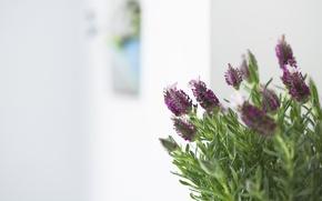 Картинка листья, макро, цветы, фиолетовые, веточки, розмарин