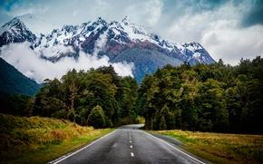 Картинка дорога, зелень, природа, туман, обои, ели, горыдеревья