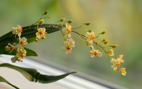 Картинка цветы, фон, ветка, желтые, орхидея