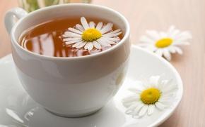 Обои ромашка, нежно, чай