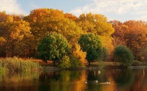Картинка осень, деревья, природа, озеро, фото, берег